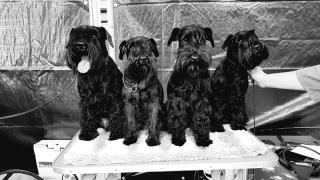 Die ganze Verwandtschaft! Opa Karlos, Mama, Bruder Flash und Frida!