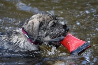 Dummyarbeit im Wasser