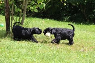 Benny & Bonita beim Spiel